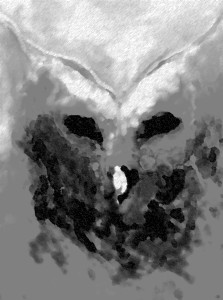 owl 1 experiment